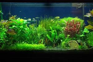 33 Attractive Aquarium background – Technosamrat