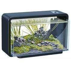 1000 images about aquascape world on pinterest