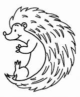 Hedgehog Coloring Colouring Down Rolling Hedgehogs Sheets Mobile Cricut Template sketch template