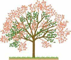 Wann Heidelbeeren Pflanzen : baumschnitt geh lzschnitt tabelle wann man welchen strauch baum oder beeren am besten ~ Orissabook.com Haus und Dekorationen