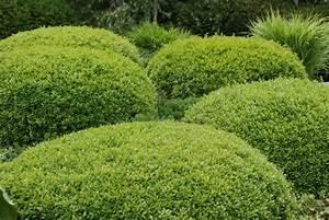 Ersatzpflanze Für Buchsbaum : hilfe f r buchsbaum zinsser gartengestaltung ~ Michelbontemps.com Haus und Dekorationen