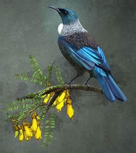 Khandallah artist and 'bird nerd' keeps native treasures ...