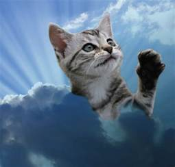 cat heaven the lolcats rewrite the bible cat hell cat heaven the