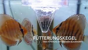 Lebendfutter Für Fische : f tterungskegel insbesondere f r lebendfutter und frostfutter youtube ~ Watch28wear.com Haus und Dekorationen