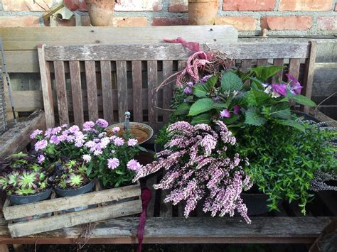 Pflanzen Für Den Balkon by Herbstbepflanzung F 252 R Den Balkon Pflanzen