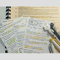 Study! • 《 8 August 》 More Biology Flashcards! Moving On To