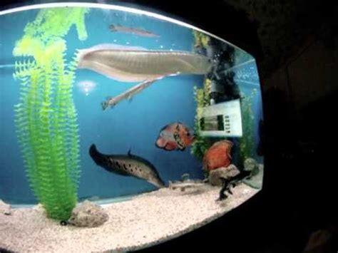 monster fish aquarium  israel youtube