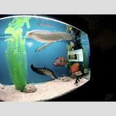 monster fish aq...