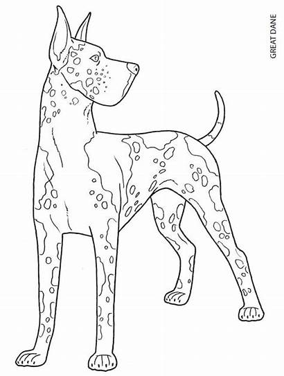 Dane Coloring Pages Dog Dogs Colouring Draw