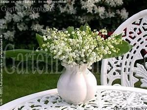 Pflanzen Im Mai : bild maigl ckchen convallaria majalis foto maigl ckchenstrau blumenstrau mit duft aus dem ~ Buech-reservation.com Haus und Dekorationen