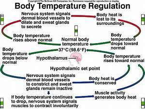 Body Temperature Regulation  Heat Loss  Thermoregulation