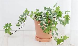 Was Brauchen Pflanzen Zum Wachsen : pflanzen f rs bad die besten profi tipps auf einen blick ~ Frokenaadalensverden.com Haus und Dekorationen