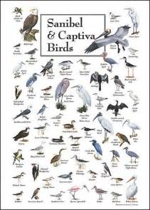 Florida Birds Identification Chart