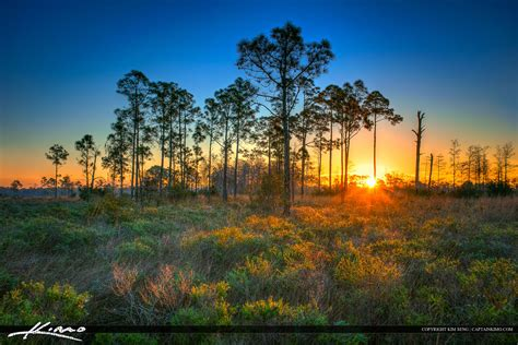 pine glades sunrise  wood lands
