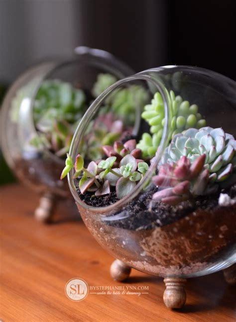 glass globe terrarium gardening terrarium diy succulent terrarium succulents