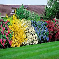 1000+ Ideas About Flowering Shrubs On Pinterest