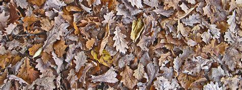 Garten Kaufen Berlin Nord by Kompost Und Erden Material Kaufen Kompost Erden Nord Gmbh