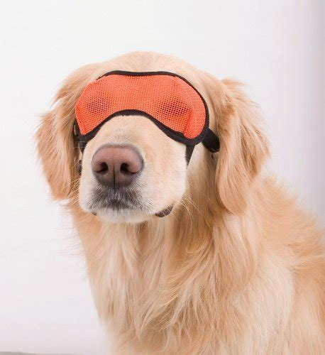 Brillen Für Hunde Mit Sehstärke