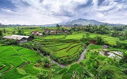 Indonesia Java Rice Terraces Hills Terrace Creek