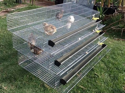 quail hutches 3 tier fully automatic quail laying cages animals