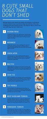 miniature breeds that dont shed small dogs that don t shed a list of non shed dogs