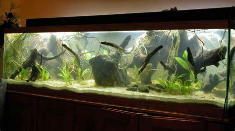 Amazon Aquarium Biotope