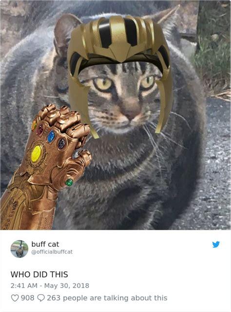 muscular cat     internet
