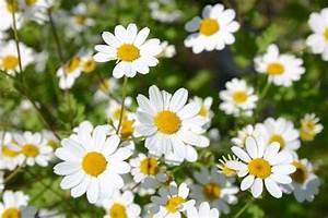 Lang Blühende Pflanzen : dauerbl her lang bl hende stauden gr fin von zeppelin ~ Eleganceandgraceweddings.com Haus und Dekorationen