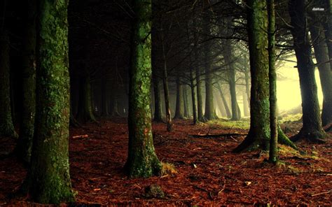 Tree In Woods Wallpaper by Woods Wallpapers Wallpaper Cave