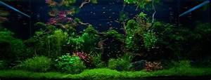 Pflanzen Im Aquarium : wasserpflanzen auswahl und einsetzen my fish ~ Michelbontemps.com Haus und Dekorationen