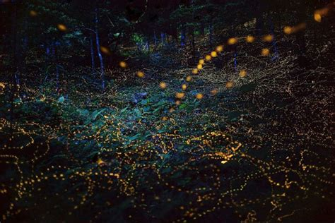 mesmerizing photographs  fireflies   land