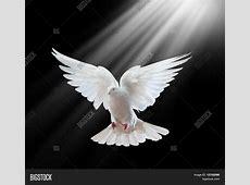 Free Flying White Dove Isolated On Image & Photo Bigstock