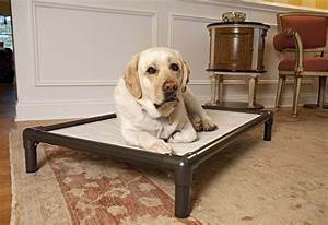 5 really indestructible dog beds the kong dog bed for Puppy proof dog bed