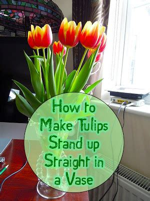 How To Preserve Flowers In A Vase by Garden And Farms How To Make Tulips Stand Up In