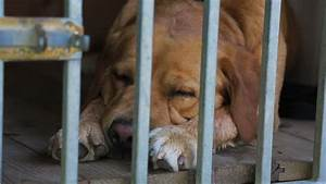 Sad Dog In Cage Stock Footage Video 2811508 - Shutterstock