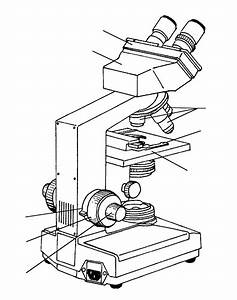 Light Microscope Drawing At Getdrawings