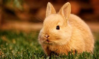 Rabbit Wallpapers Background Rabbits Hdwalle