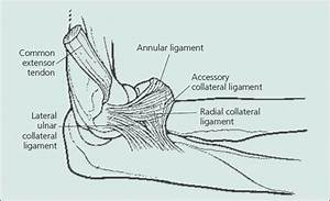 Lateral Ulnar Collateral Ligament Physioscholar ...