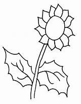 Sunflower Coloring Pages Colornimbus sketch template