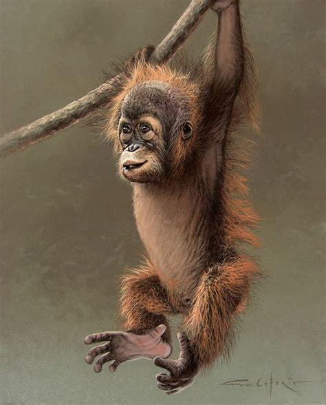 images  monkey  pinterest watercolors