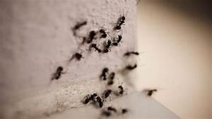 Ameisen Im Wohnzimmer Was Tun : ameisen biotec klute gmbh ~ Lizthompson.info Haus und Dekorationen