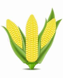 Corn vector illustration | Stock Vector | Colourbox