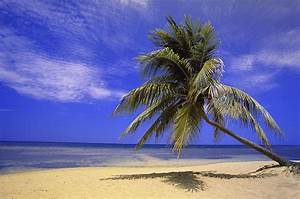 View Of Ocean From Beach With Palm Tree Photograph by