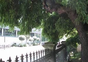 Kleiner Baum Mit Breiter Krone : japanischer schnurbaum alter baum mit schattiger krone ~ Michelbontemps.com Haus und Dekorationen