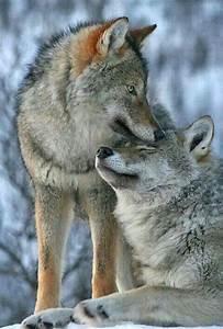 The Wild Hug : wolf hug love hugs kisses laughter smiles n tears pinterest wolf hug and animal ~ Eleganceandgraceweddings.com Haus und Dekorationen
