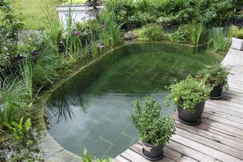naturpool oder schwimmteich graf gartenbau schwimmteich gmbh gartenbau badeteiche und schwimmteiche
