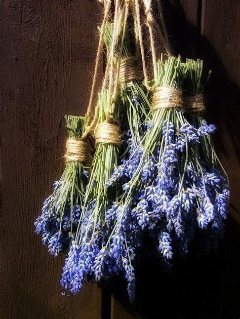 lavender for flies hanging lavender keeps the flies out need to hang this in my chicken coops gardening