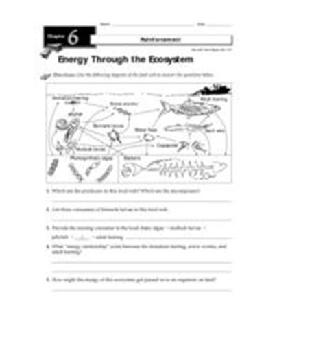 Energy Through The Ecosystem 3rd  8th Grade Worksheet  Lesson Planet