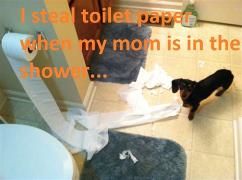 owner of dixie toilet 100 best images about dachshund shaming on pinterest
