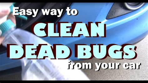 easy way to clean remove dead bugs from your car